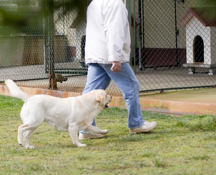 Terapias con perros en las cárceles españolas.