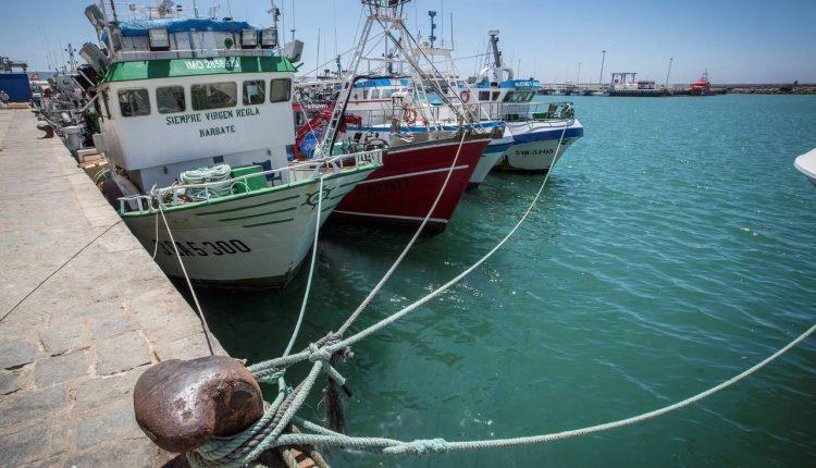Los pesqueros que han quedado amarrados en el puerto de Barbate (Cádiz) al haber expirado el protocolo de pesca firmado entre Marruecos y la Unión Europea en 2014.